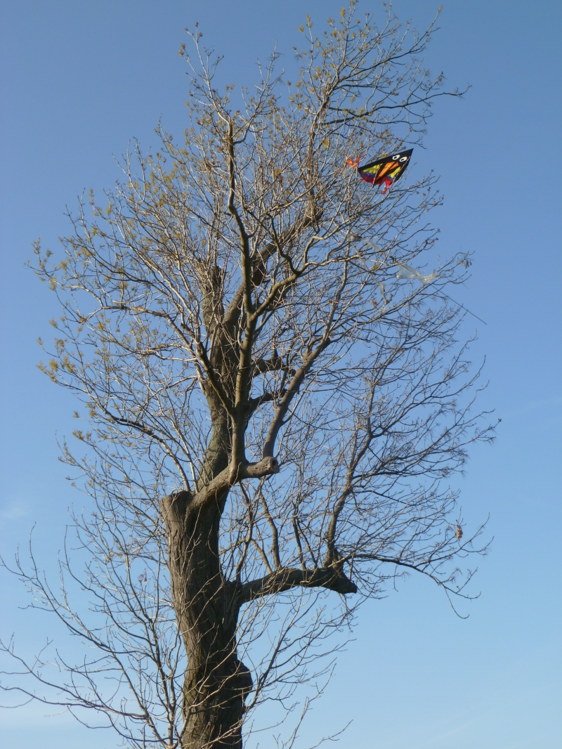 Kite Up the Tree